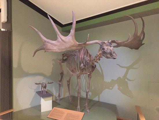Naturhistorisches Museum: foto7