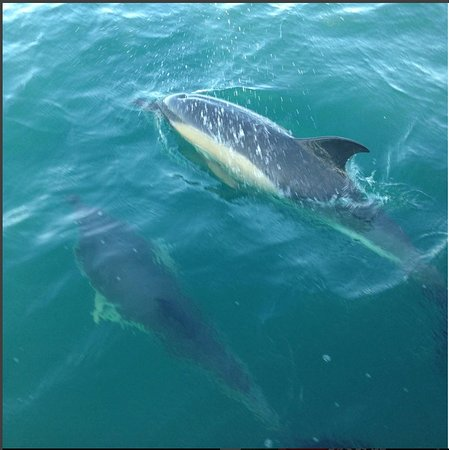 A couple of the beautiful dolphins we saw