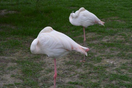 Giraffe House Wildlife Awareness Centre: flamingos