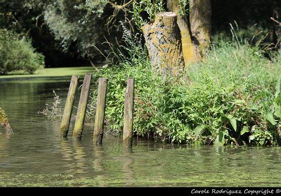 Marais de l'Audomarois : Les marais Audomarois