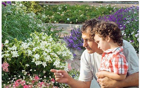 Botanical Garden: Sommarblommor/annulas