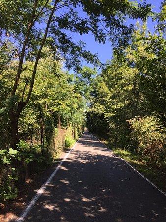 Fiano, Italia: Traverser la forêt pour arriver à l'hôtel