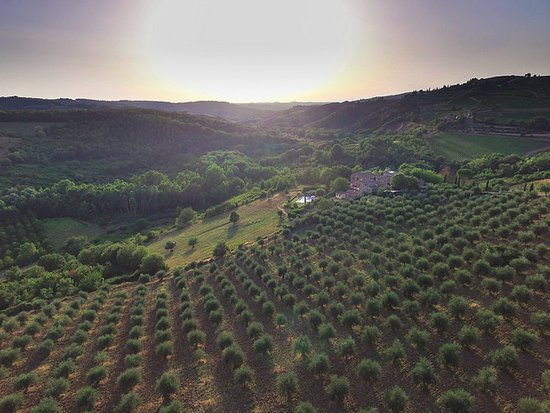 Agriturismo Podere Felceto: Drone shot of Podere Felceto and olive fields