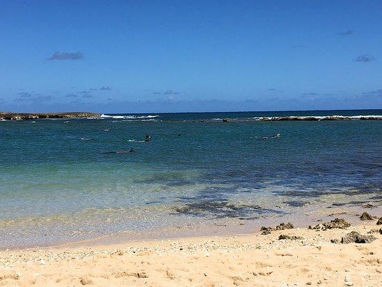 Turtle Bay Condos: photo1.jpg