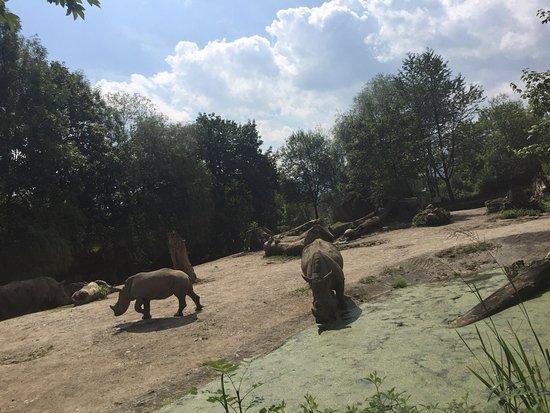 Anif, Österrike: Fotos aus dem Tierpark Hellbrunn