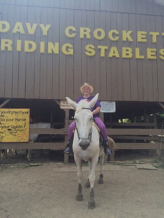 Davy Crockett Riding Stables: Smokey the Mule and I rode thru the forest.