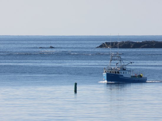 Point of View Suites at Louisbourg Gates : Fishing boat returing to port