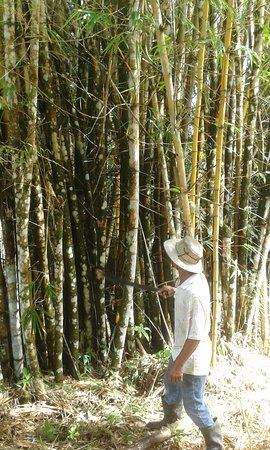 Punta Gorda, Belize: bamboo grove front entrance