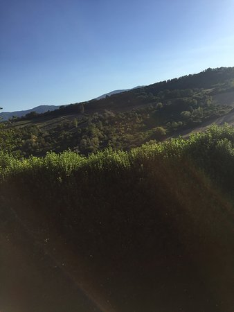 Tenuta Monte Volparo: photo8.jpg