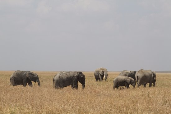 Kanuth Adventure Safaris-Day Trips