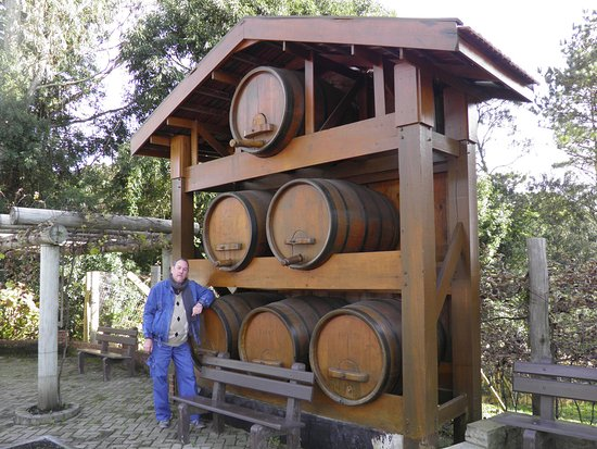Vinhos Don Collise