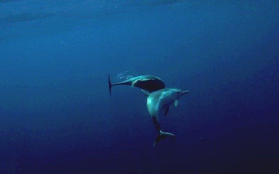 Six-Fours-les-Plages, França: Dauphins bleu et blanc