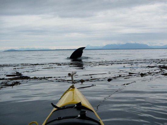 Gustavus, AK: Kayaking along the icy straight for a 3-day expedition with Spirit Walker Expeditions. SO AMAZIN