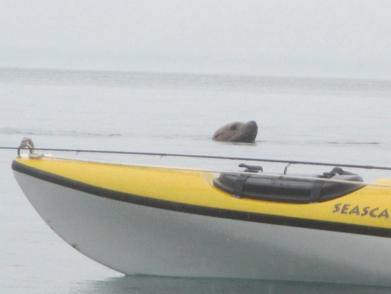 Gustavus, AK: Sea lions are abundant