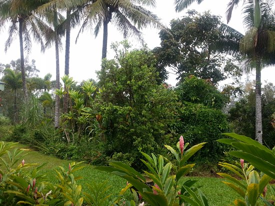Lava Tree Tropic Inn: Garden view from the varanda