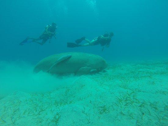 Brayka Bay Reef Resort: Diving in Marsa Alam