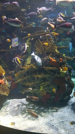 20160815 124334 Picture Of Ripley 39 S Aquarium