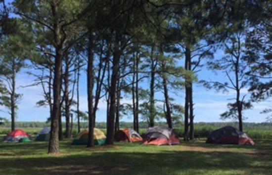 Chincoteague island koa prices campground reviews va for Cabins near assateague island