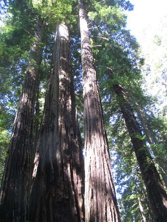 Orick, Kalifornia: Trees like these line the route.