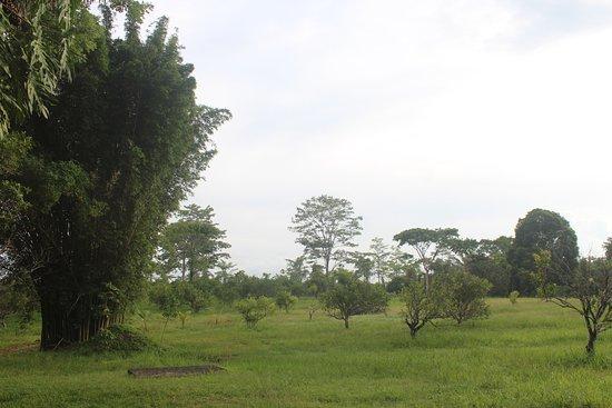 Punta Gorda, Belice: Middle Orchard at Dawn