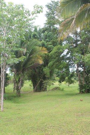 Πούντα Γκόρντα, Μπελίζ: Garden views