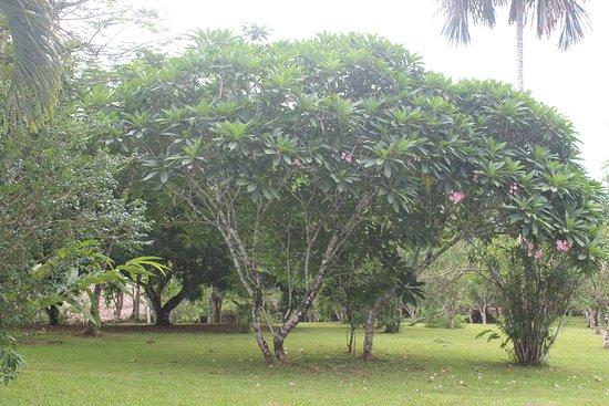ปุนตากอร์ดา, เบลีซ: Oleander from the Main Lodge