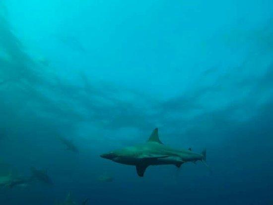 Shelly Beach, Южная Африка: FB_IMG_1471455827050_large.jpg