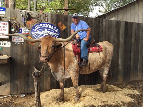 Atop a Texas Longhorn Steer at Luckenbach TX