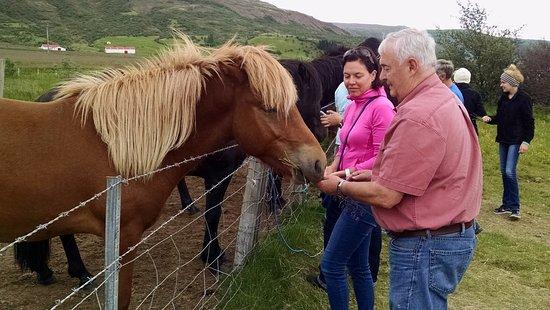 Iceland Horizon: Icelandic horses