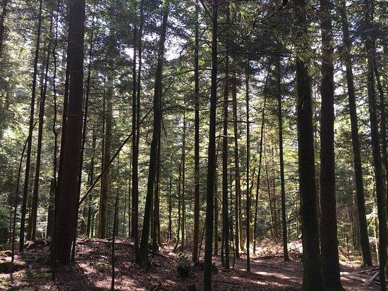 Vagney, فرنسا: Nature around the Campsite.