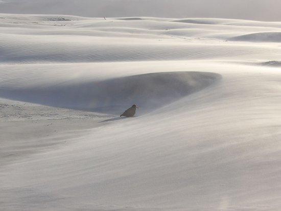 Collingwood, Nueva Zelanda: du sable à perte de vue