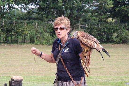 Newent, UK: Jemima Parry-Jones describes how every bird in flight display lives, eats and flies.