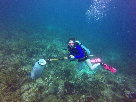 Punta Gorda, Belize : Spear fishing Lion fish
