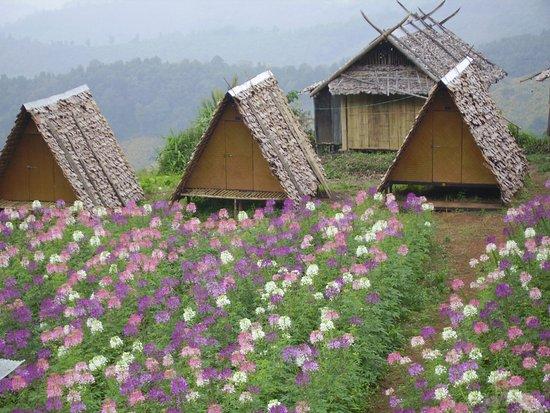 Коголен, Франция: boa tong thailande