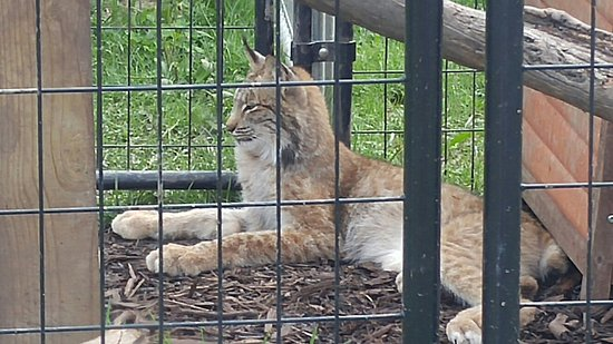 Harpursville, NY: The animals of Animal Adventure Park