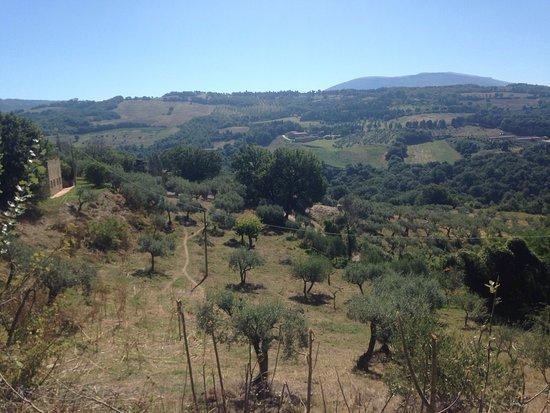 Agriturismo Locanda dell'Angelo : photo2.jpg