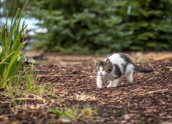 ซอเมอร์ส, มอนแทนา: Our outdoor resident kitten