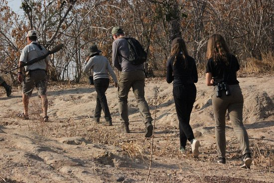 North Luangwa National Park, Ζάμπια: walking safari