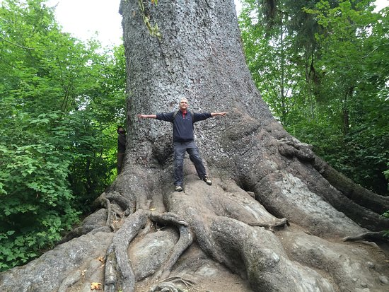 "Quinault, Etat de Washington : My 6'4"" husband at the base of the Big Spruce Tree"