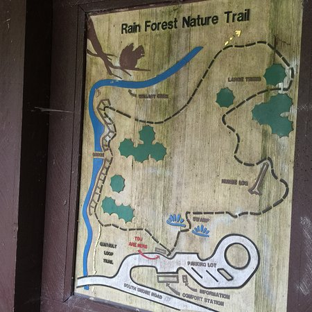 Map of the Nature Trail in the Quinault Rain Forest - Picture of ...