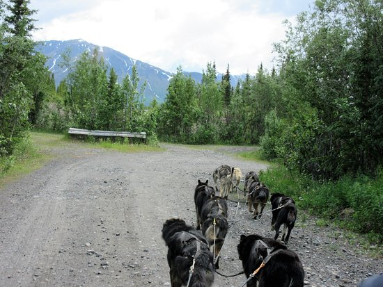 Cantwell, AK: Great scenery - view from the dog cart, June 2016