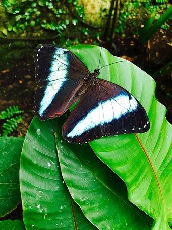 Butterfly Park of Benalmadena: photo5.jpg