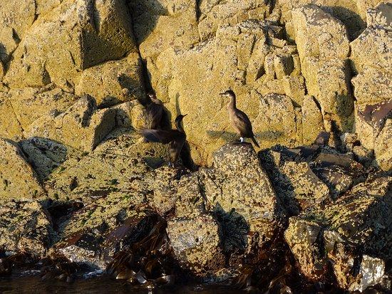 Cheswick, UK: One of the many seabirds