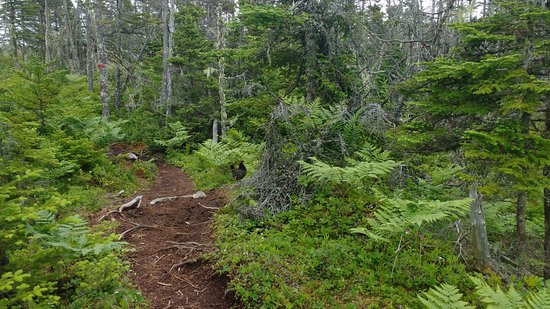 Spry Bay, Καναδάς: Spruce Grouse along the Path