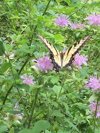 Sandy Spring, MD: Butterfly on Trail