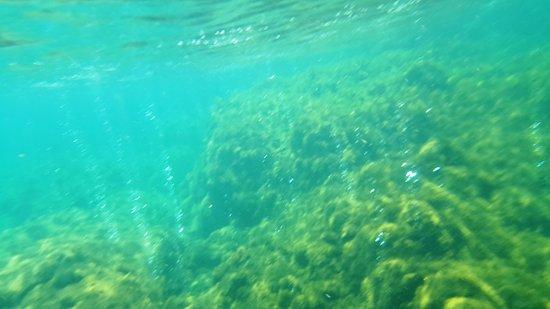 Champagne Beach: Bolinhas saem dos corais de Champagne Reef
