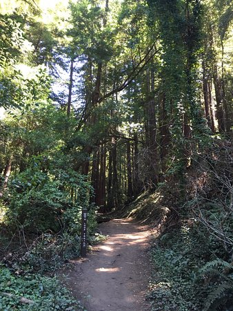 Scotts Valley, CA: Trail, not recommended for strollers.