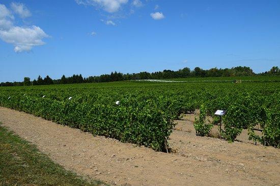 Dunham, Canadá: Vineyard