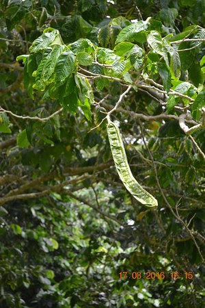 Kaneohe, Гавайи: tree