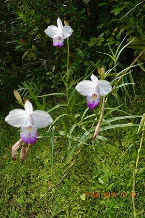Kaneohe, HI: flowers
